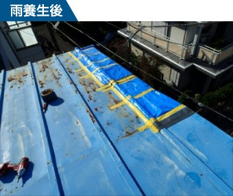ブルーシートで雨養生された瓦棒のトタン屋根