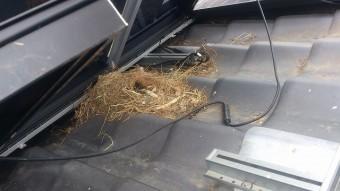 パネル下の鳥被害写真